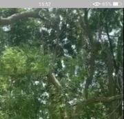 相關圖檔說明:果農修剪雜木不慎摔落坡崁   橫山警沿公墓呼喚及時發現送醫救治,圖片總數共2張